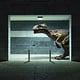 The Wildlife – Dinos inParis (Kwerfeldein)