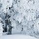 Winterwälder von HeikoGerlicher (Kwerfeldein)