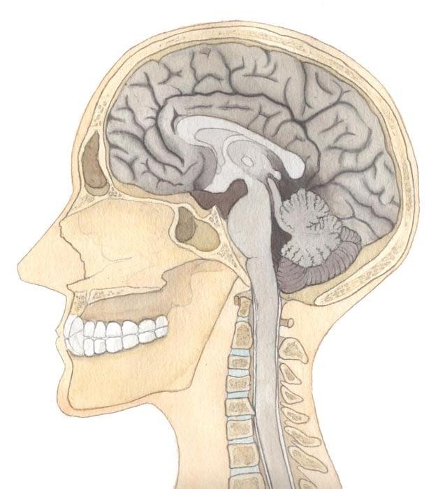 Medizinische Illustrationen – Brachoradialer Pruritus