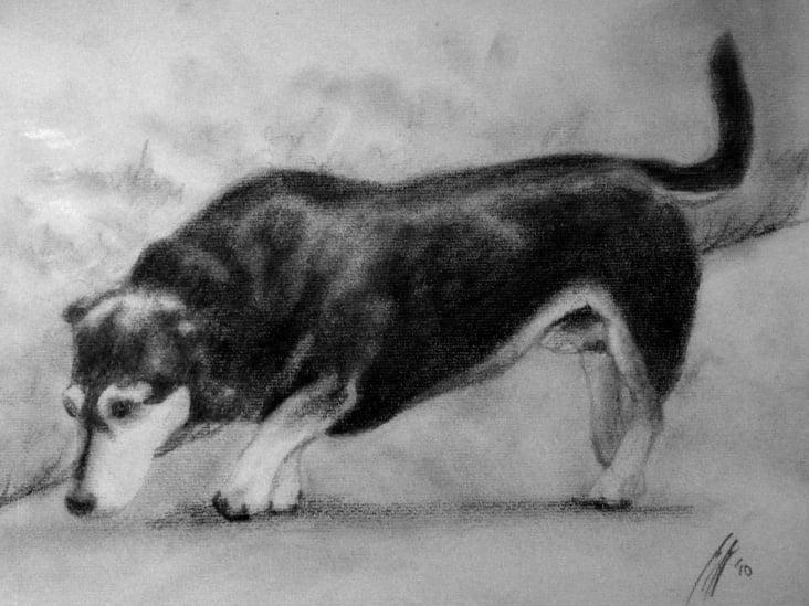 Hund klein A4