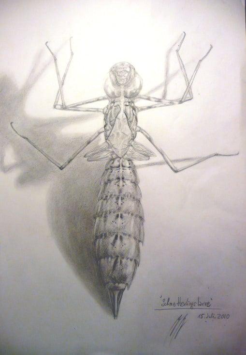 libellenlarve A3