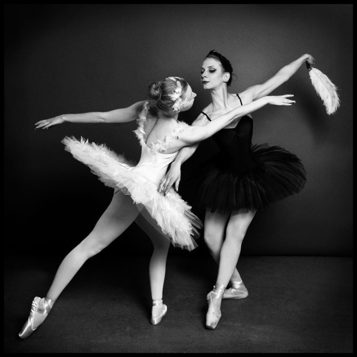 White and black swan