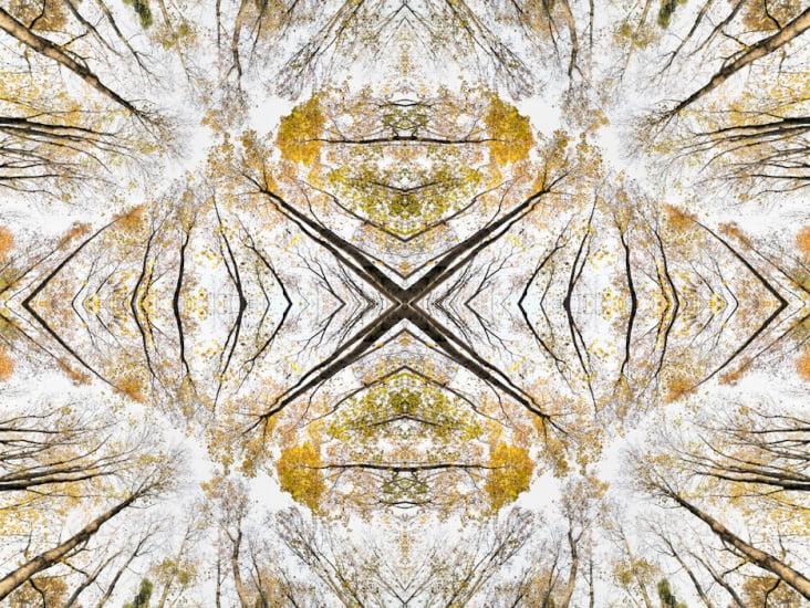 Giant Trees XVI – Kaleidoskop 1