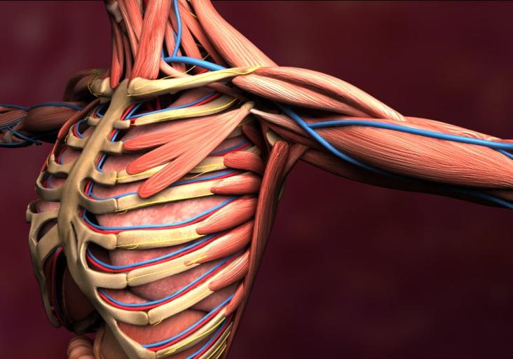 Anatomievisualisierung