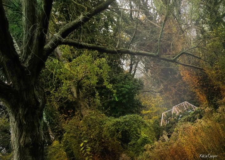 In der goldenen Jahreszeit fotografiert und nachbearbeitet.