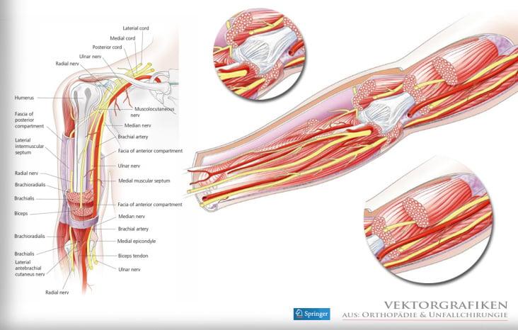 Medizin – Anatomie» von Marion Wieczorek – dasauge®