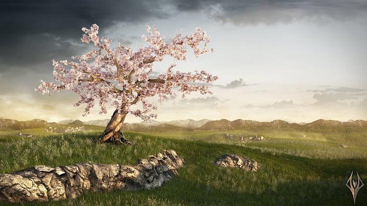 Cherry Tree – TiefenWerft