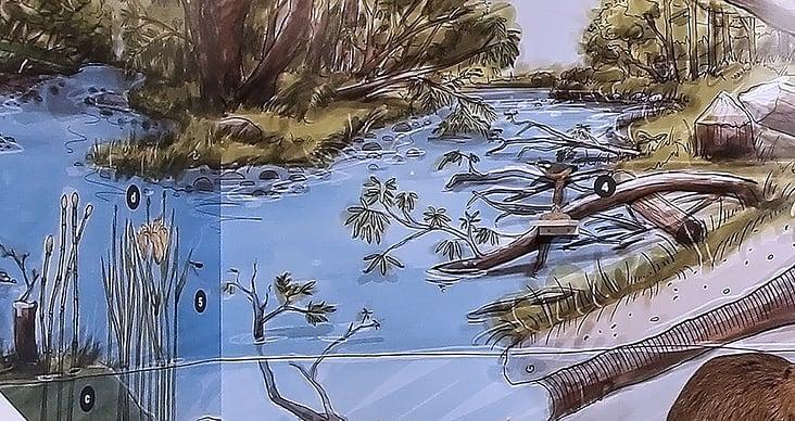 Sonderausstellung Naturama: Illustration Landschaftswandbild