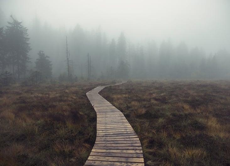Moor im Harz