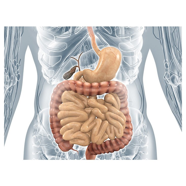 """Innere Organe – anatomische Illustrationen"""" von Med Visual – dasauge®"""