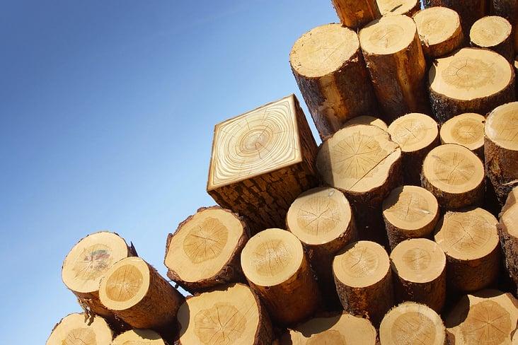 Squared treelog