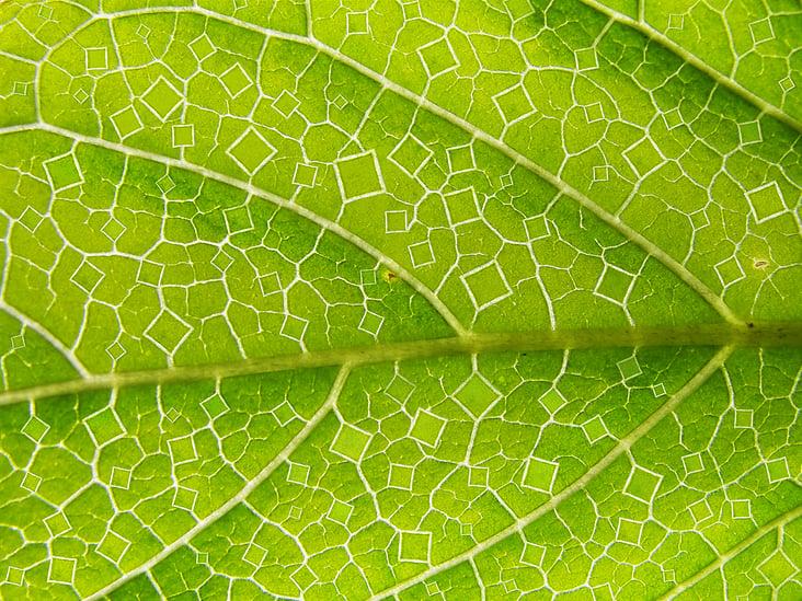 Squared leaf
