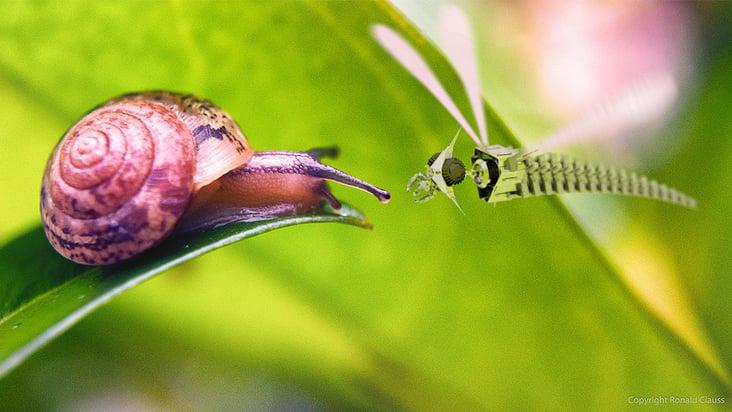 Mech DragonFly Snail