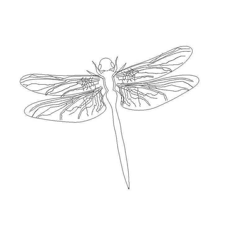 Illustration– Libelle