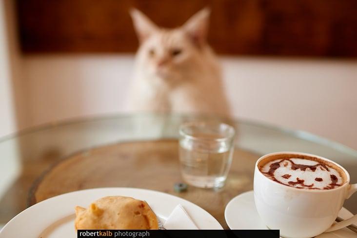 Cafe Neko (Katzencafe)