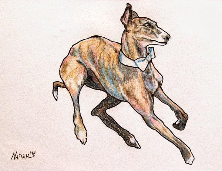 """""""Hund mit Fliege"""" Buntstift, Fineliner auf Zeichenkarton"""