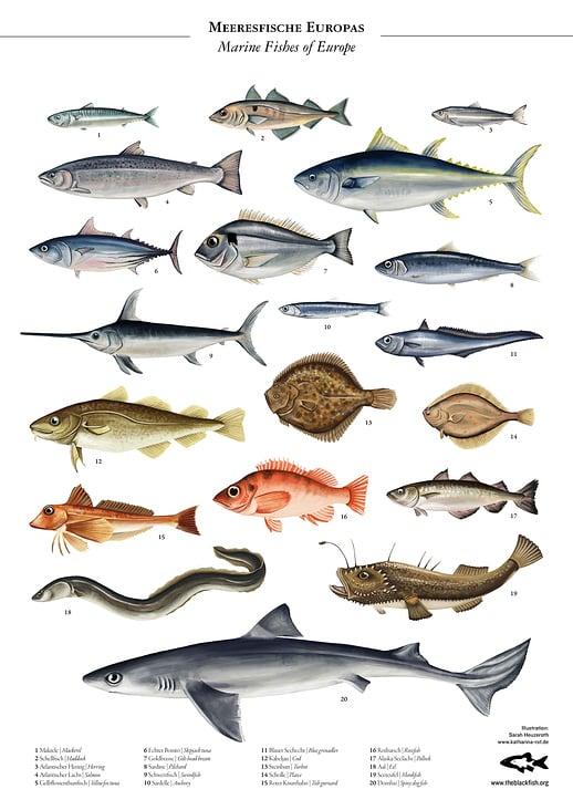 Meeresfische Europas