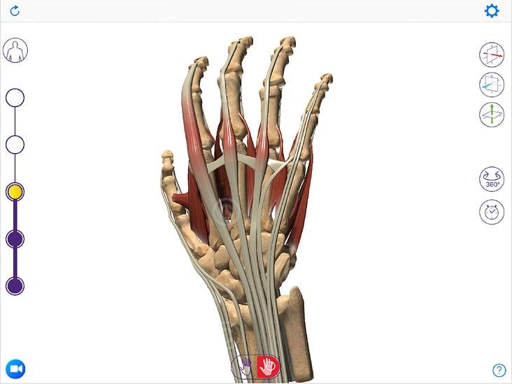 App zur Anatomie und Erkrankungen der Hand