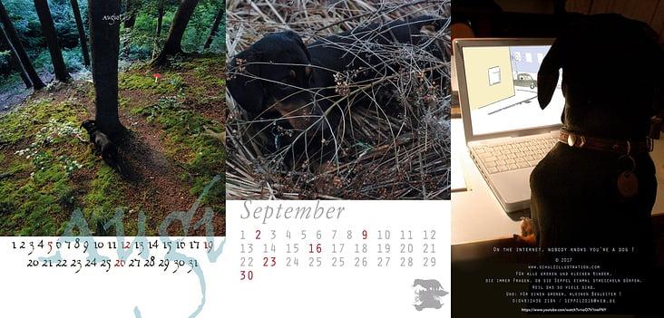 Dackelfotografie + Kalenderlayouts 2