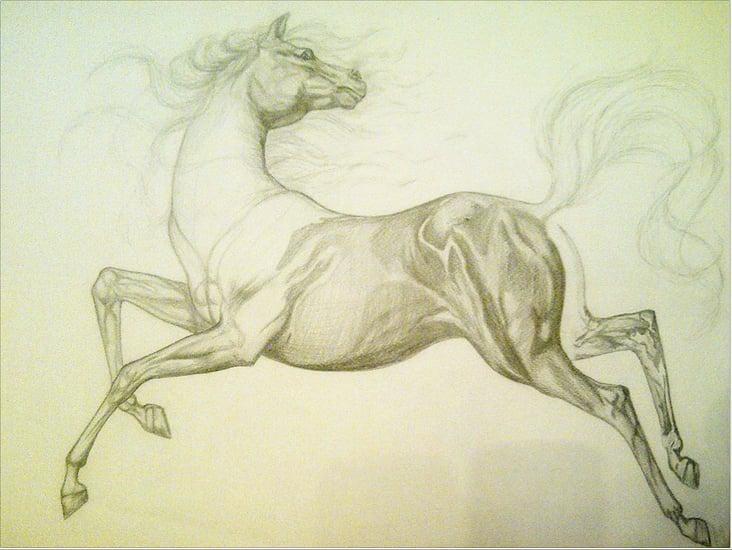 Pferd (Bleistift)