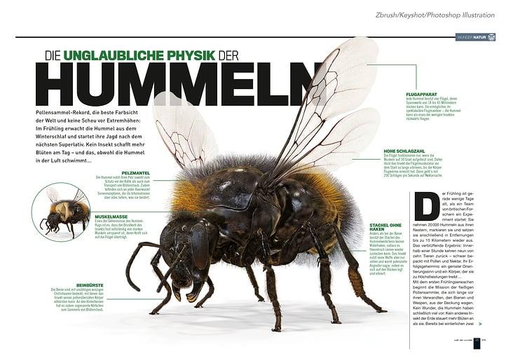 Physik der Hummel / Illustration für Welt der Wunder