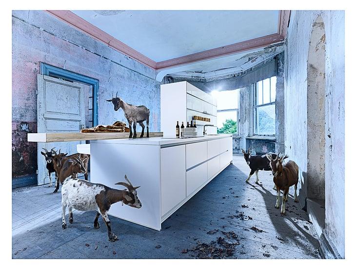 … erobern die Küche
