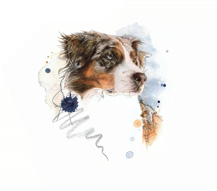 Easy Red Merle