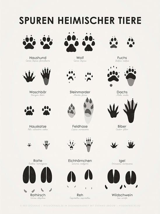 Heimische Tierspuren (Hidden Tracks)
