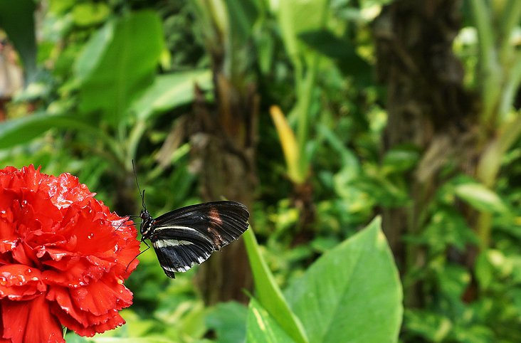 Buttefly on red flower