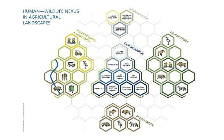 Infografik – Human—Wildlife Nexus 2