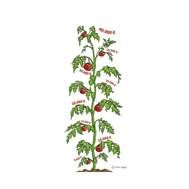Illustration Tomatenpflanze