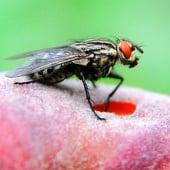 """""""Insekten"""" von Lothar Seifert"""