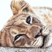 """""""Arts & Cats"""" von Nicole Zeug"""