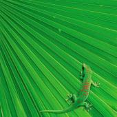 """""""Green"""" von Joanna Leciejewicz"""