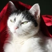 """Bastet the Beauty Cat 30. Okt. 2012"" von"