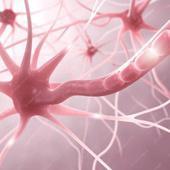 """""""Nervenzellen, Synapsen und Neuronen"""" von Med Visual"""