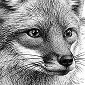 «Fuchs» von Janine Wiget