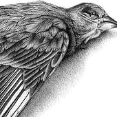 «Vogel» von Janine Wiget