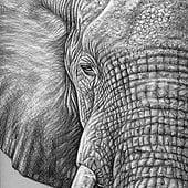 """Drawings 2015"" von Nicole Zeug"