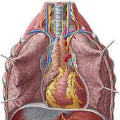 """""""Medizinische Illustrationen"""" von Yousun Koh"""