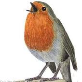 """""""Vogelillustrationen"""" von Sybille Benedict-Rux"""