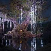"""""""Hero Tree"""" von Marc Heintz"""