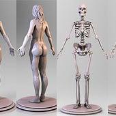 """""""Anatomie"""" von Jonas Steinberg"""