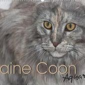 """""""Maine Coon Aquarelle"""" von Hahn, Jasmin"""