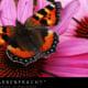 Farbenpracht Naturfotografie