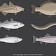 Piktogramme Fischarten