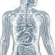 Innere Organe des menschlichen Körpers: anatomische 3D-Illustrationen und medizinische Grafiken