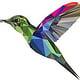Kolibri-Polyart