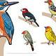 Vögel II (Vektor)